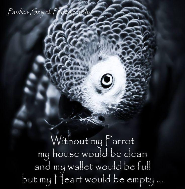 my pet parrot compunere Derby, united kingdom al-madinah, saudi arabia semarang, indonesia kansas city (mo), united states chlef (ech cheliff), algeria bahia blanca, argentina.