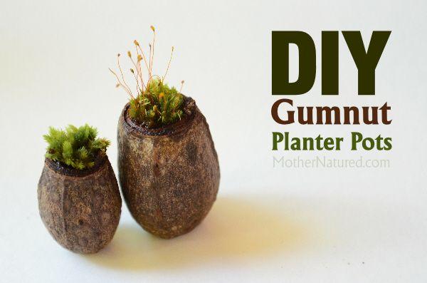 Gumnut Planter Pots
