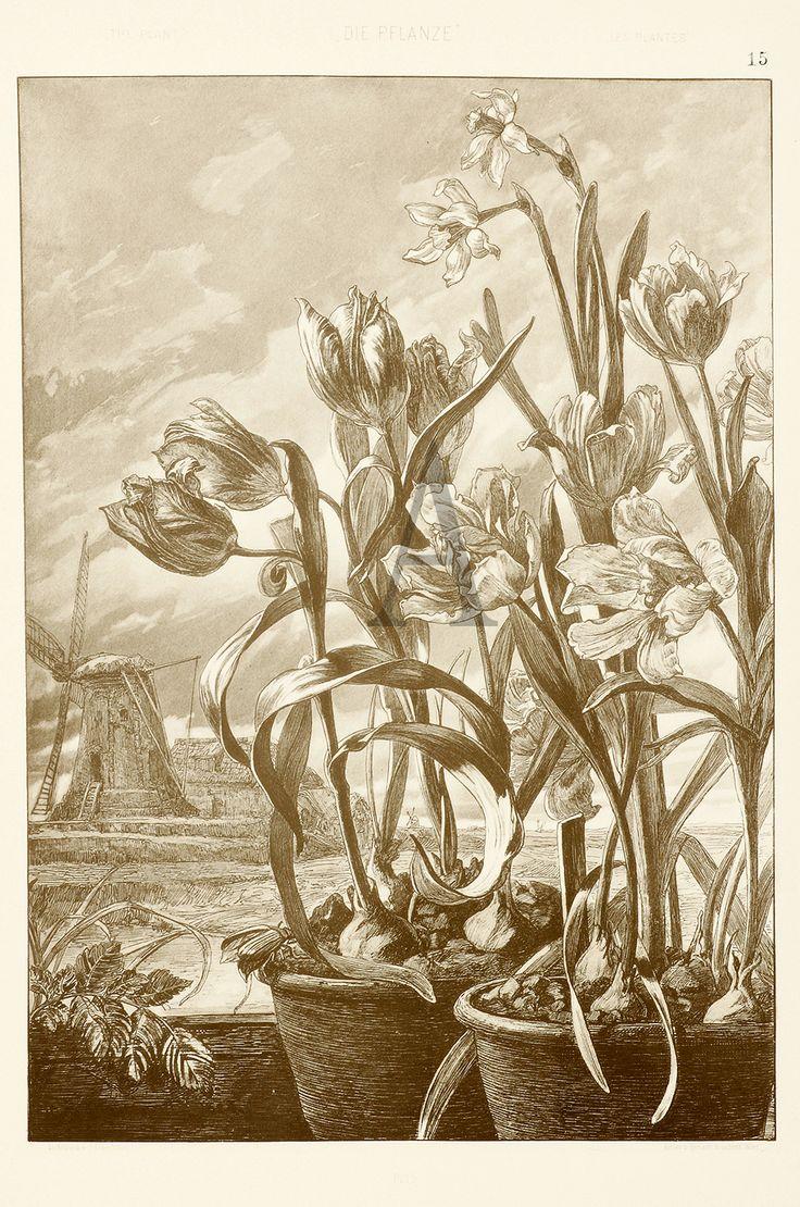 Anton Seder | BOTANICAL ART NOUVEAU