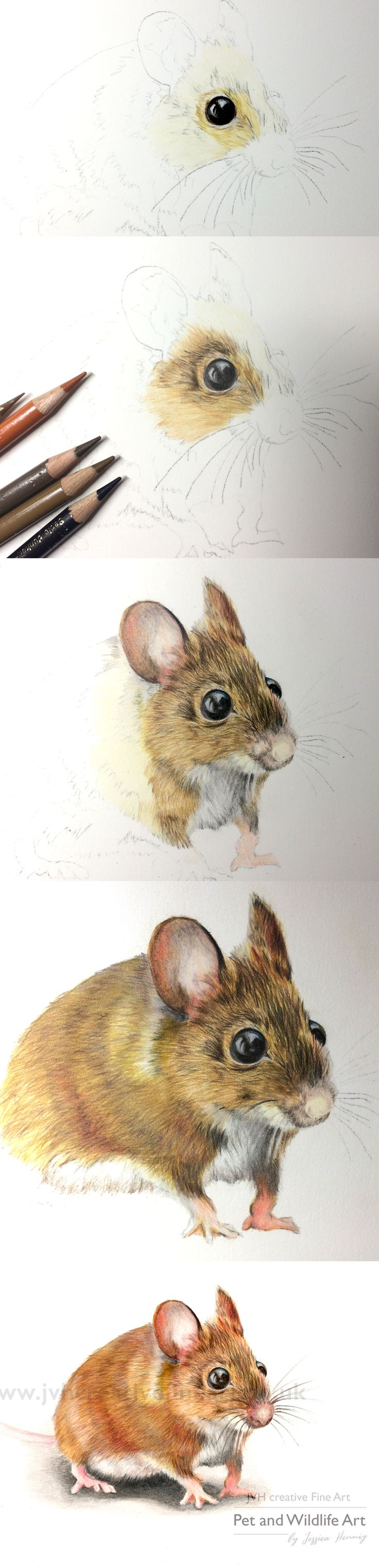 Coloured pencil drawing of a field mouse. Step by step collage by JVH creative Fine Art - Pet and Wildlife Art. Tina the fieldmouse is available as a limited print edition from my website.