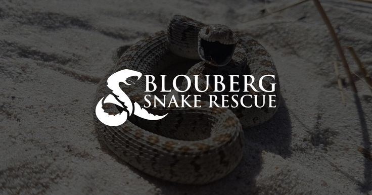 We capture & relocate snakes from your home, garden, or business in and around Cape Town. Watch our free videos and learn more about snakes in South Africa.