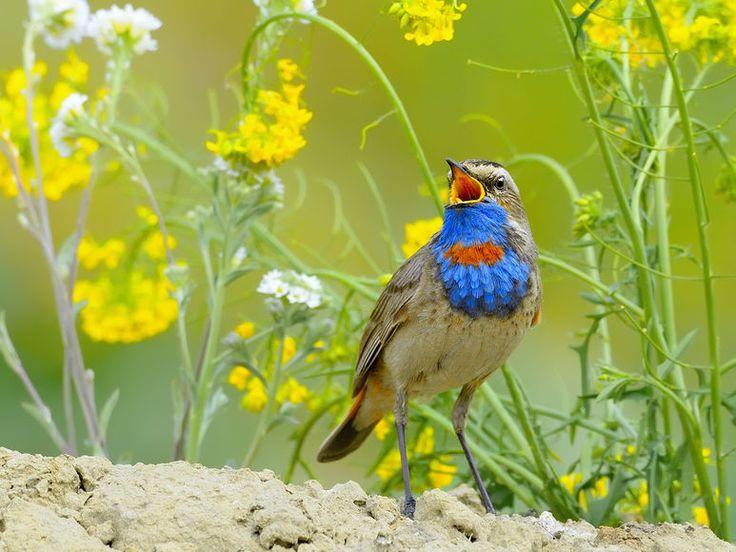 Звуки летнего луга. Фото Влада Владиленова | Птицы и Природа