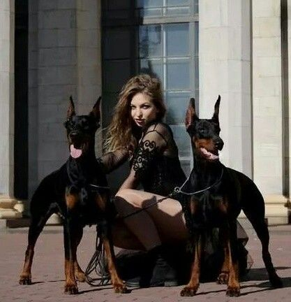 Doberman dogs with model