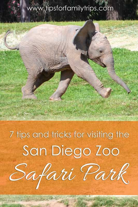 7 MUST HAVE tips and tricks for visiting the San Diego Safari Park in Escondido, California | tipsforfamilytrips.com | spring break | summer vacation | fall break | family vacation