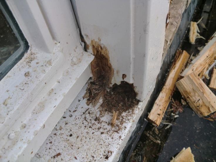 In veel gevallen zijn kleine reparaties al genoeg om uw kozijn of deur te redden van houtrot. Het is daarom noodzakelijk de juiste manier van houtrot repareren te kiezen. Wij geven u graag meer informatie over de mogelijkheden van houtrot reparatie door Hemmerworks.