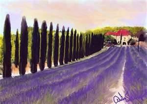 Italian Lavender Field