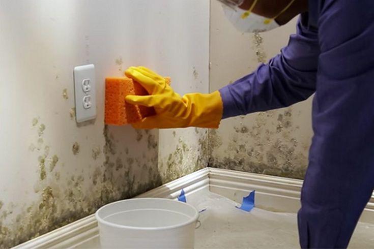 Thumb As paredes da sua casa estão mofadas? Pulverize isto nelas e você nunca mais vai ver mofo nas paredes da sua casa