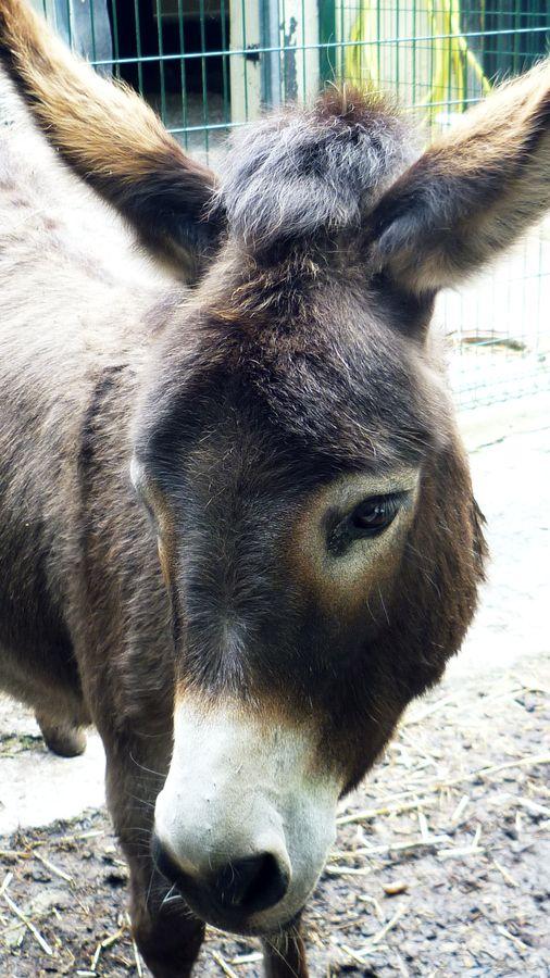 I totally adore donkeys!!