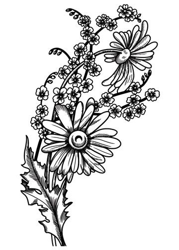 Sketch Daisies Temporary Tattoo Vintage Floral Tattoos