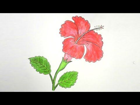 How To Draw A Hibiscus Flower Step By Step Very Easy Youtube Flower Drawing Hibiscus Flower Drawing Flower Step By Step