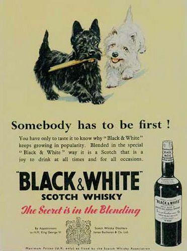 Black & White Scotch whisky ad
