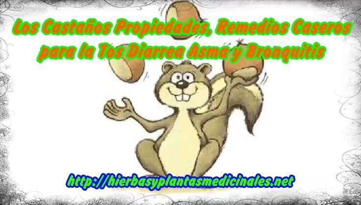 Los Castaños Propiedades, Remedios Caseros para la Tos Diarrea Asma y Bronquitis. http://hierbasyplantasmedicinales.net  los castaños, castaño propiedades, propiedades de las castañas, diarrea, remedios caseros para la diarrea, como parar la diarrea, BRONQUITIS, remedios caseros para el asma, remedios caseros para la tos, hierbas medicinales, remedios caseros, plantas medicinales,