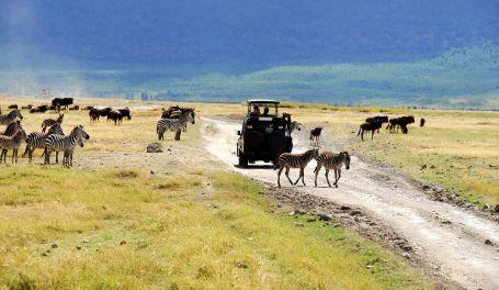 tansania safari im Tansania Reiseführer http://www.abenteurer.net/3035-tansania-reisefuehrer/