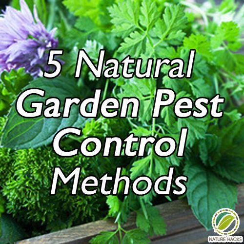 200 Best Tuin: Ongedierte (Bestrijding) / Gardening: Pest (Control