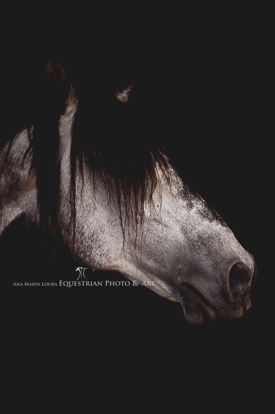 Equine Photography & Art