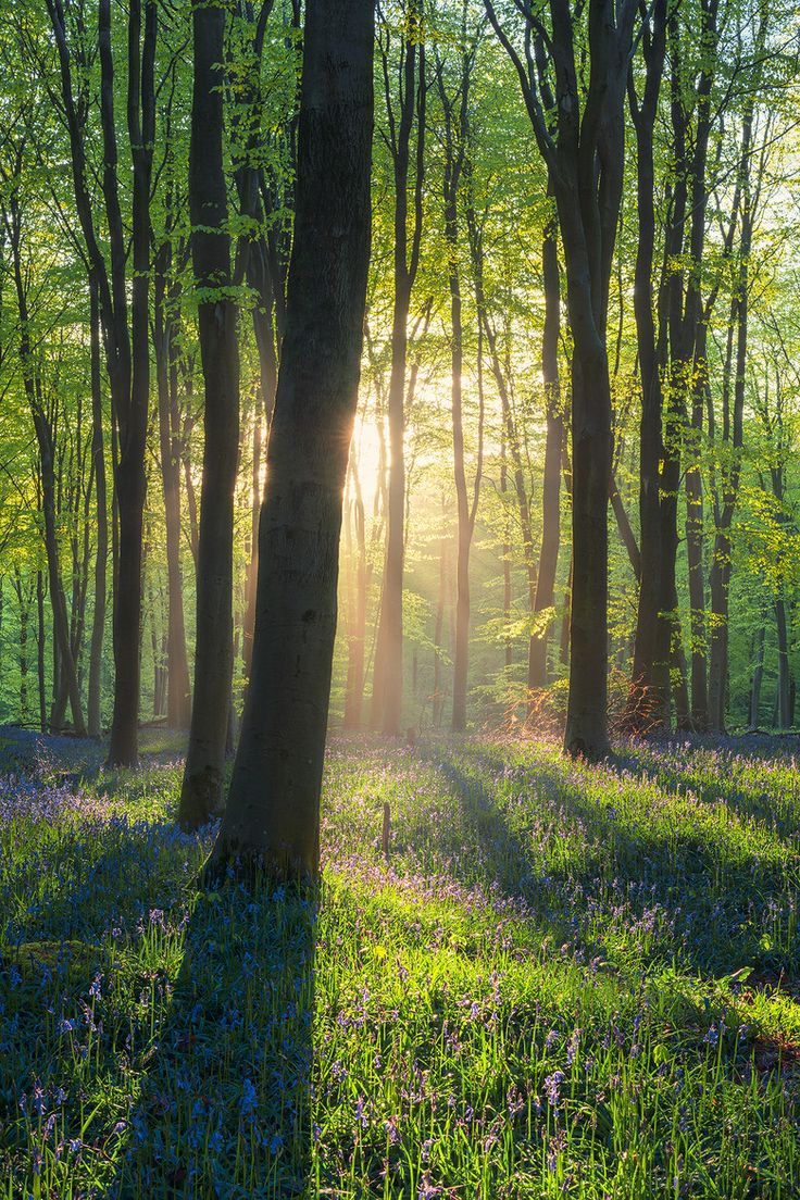 Spring Time in Micheldever Wood. Hampshire | by Louis Neville | Facebook.