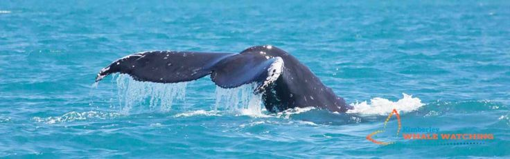 Get Wild on the Kimberley Coast in the Far North of Western Australia. Visit Kimberley Whale Watching for inspiration and amazing photography of this remote part of Australia  http://kimberleywhales.com.au/