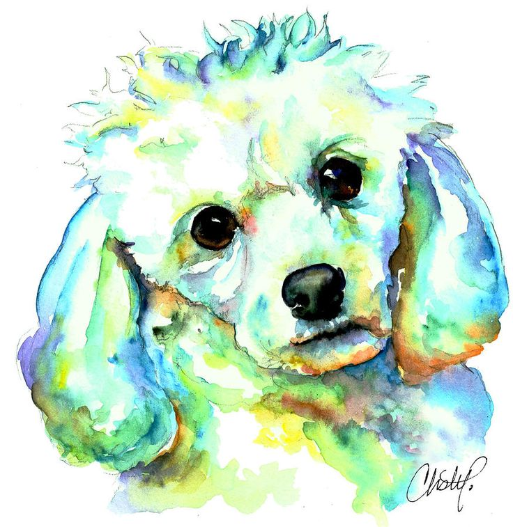 White Poodle Painting by Christy Freeman - White Poodle Fine Art Prints and Posters for Sale