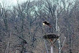 Znalezione obrazy dla zapytania platform for birds of prey