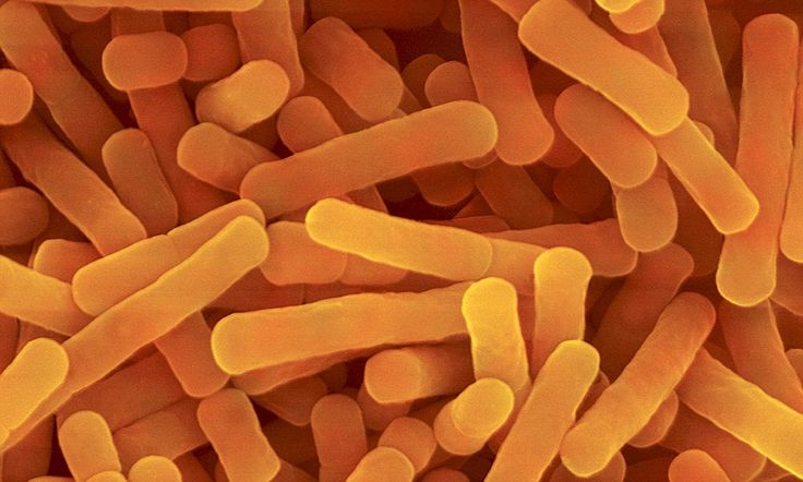 Low levels of healthy gut bacteria can cause mental health issues such