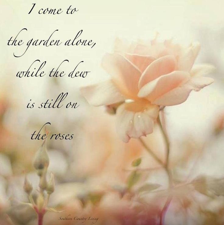 I Come To The Garden Alone While The Dew Is Still On The Roses A Walk Through The Garden