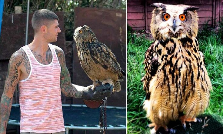Beware the eagle-owl! Giant bird capable of eating cats and dogs escapes from aviary sparking warning
