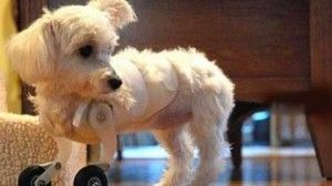 6 fabuloase animale invalide | inauntru.ro