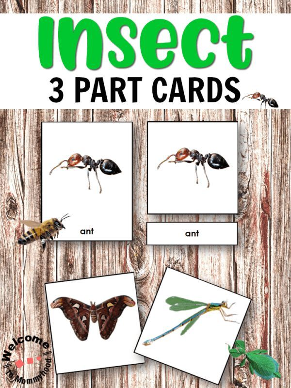 Use These Beautiful Cards To Introduce Different Types Of Insects Insect Activities Montessori Activities Preschool Insects Kindergarten Types of bugs for preschoolers