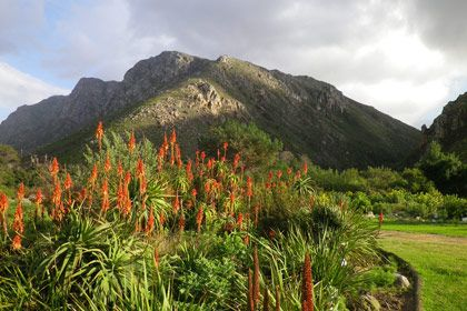 The Harold Porter National Botanical Garden near Betty's Bay, stretches from the top of the Kogelberg Mountain Range to within 10m of the sea.