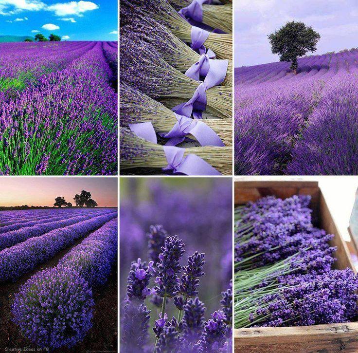 pretty pix lavender fields and bouquets