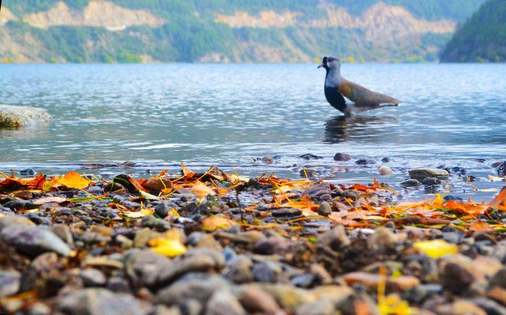 Lago Lacar - San Martín de los Andes