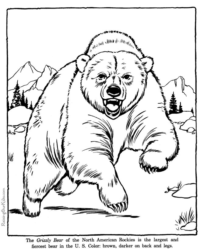 Best 28 Yellowstone Kids Activity Book images on Pinterest  Travel