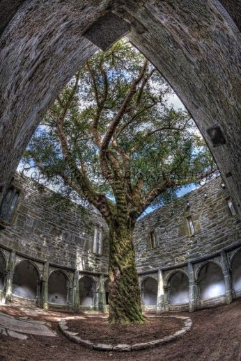 Muckross Abbey is a picturesque Franciscan monastery founded in Killarney National Park in County Kerry