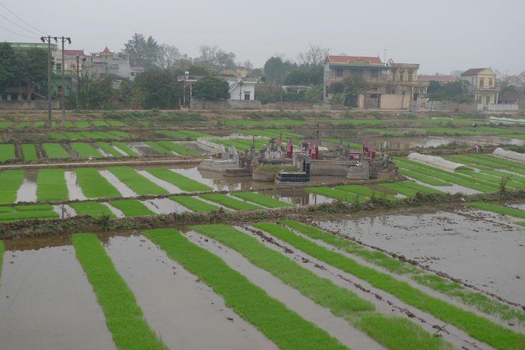 Vietnam, cimetière dans des rizières. Photo : Jacques Carl Morin