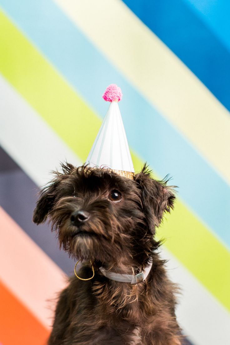 If you're into animal videos, cocktails, and DIY's then our DIY Workshop at our Studio & BARC Houston pet adoption event is for you!