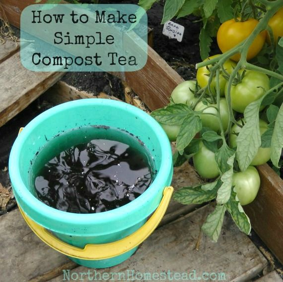 Compost tea is simply tea made out of compost. Plants love tea. Compost tea can be made very simply, and this is the way we do it.