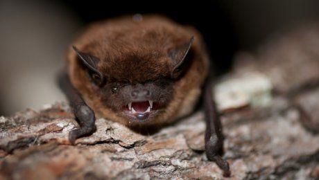 """В Бразилии летучие мыши — вампиры устроили """"кровавый пир"""", один человек погиб"""