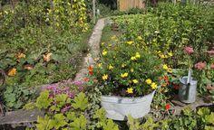 Ein vielseitiger Gemüsegarten mit Sommerblumen und Kräutern bietet beste Voraussetzungen für eine reiche Ernte. Wer auf Abwechslung setzt, braucht Fruchtfolgeprobleme kaum zu fürchten