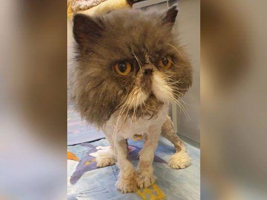 Pin Auf Katze Adoptieren Aus Dem Tierheim