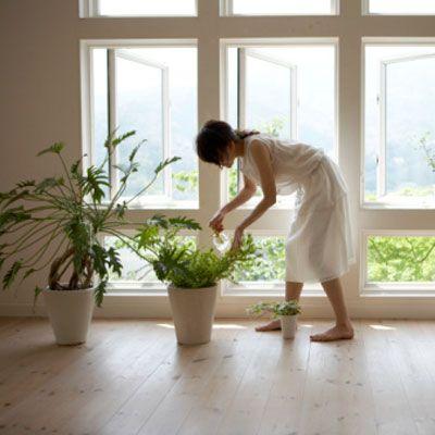 Plants that help clean indoor air.