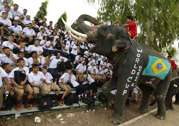 Un elefante con la bandera de Brasil realiza un espectáculo ante varios escolares durante un evento promocinal del Mundial de Brasil 2014 en la provincia de Ayutthaya (Tailandia). FOTO LPG/EFE