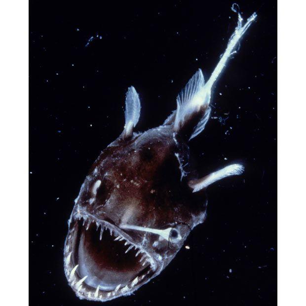 Australian scientists discover bizarre prehistoric deep-sea creatures below the Great Barrier Reef - Telegraph