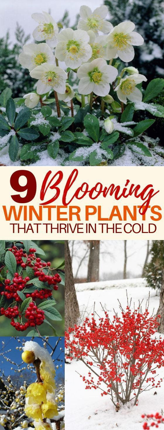 9 Beautiful Winter Plants and Flowers That Survive the Cold