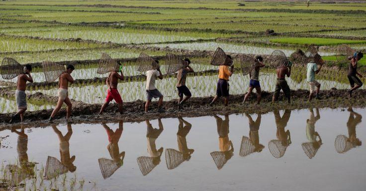Homens da tribo Tiwa caminham em um campo de arroz, com seu equipamento de pesca para participar de evento de pesca comunitária no festival Jonbeel, em Gauhati, na Índia