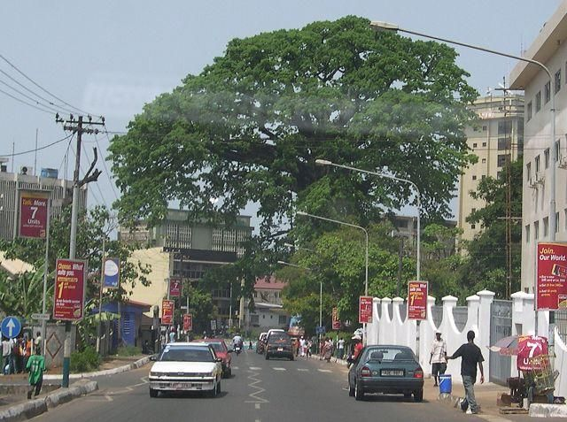 A Cotton Tree é um símbolo de Freetown, Serra Leoa. Segundo a lenda, tornou-se  símbolo em 1792, quando um grupo de ex-escravos afro-americanos, que ganharam sua liberdade lutando para os britânicos durante a Guerra da Independência Americana, estabeleceu o local de Freetown moderna. Eles desembarcaram no litoral e caminharam até uma árvore gigante logo acima da baía e realizaram um serviço de ação de graças lá para agradecer a Deus por sua libertação de uma terra livre.