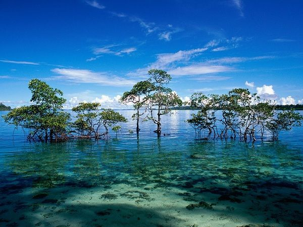 Havelock Island - 10 Places to Visit in the Andaman and Nicobar Islands