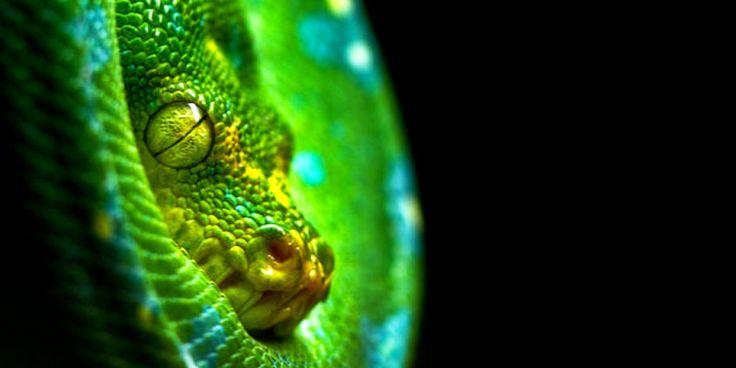 http://best5.it/post/i-5-serpenti-terrestri-piu-velenosi-della-terra/