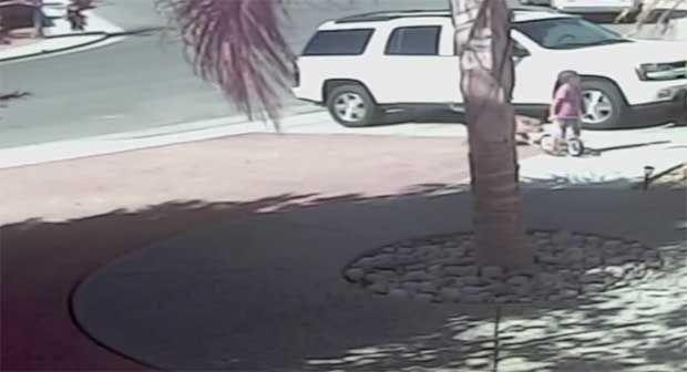 Γάτα έσωσε παιδάκι από σκύλο (video) http://bit.ly/1hNAIvm
