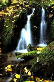 Malvern Water Cure - Malvern's history with Holistic Medicine -