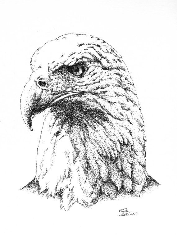Eagle fine art print, Pointillism, Stipple, Pen and Ink Drawing.   ComicGenius